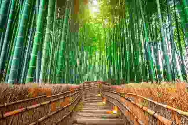 Bamboo Forest, Kyoto, Japan (Shutterstock)