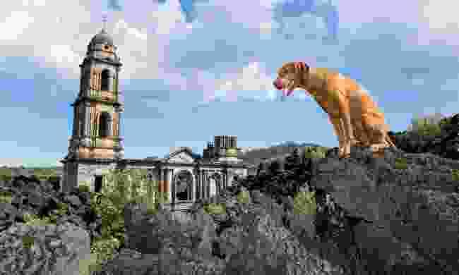 A dog sitting on lava overlooking the church at San Juan Parangaricutiro  (Shutterstock)