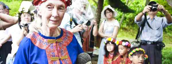 Jane Goodall in Taitung (Dreamstime)