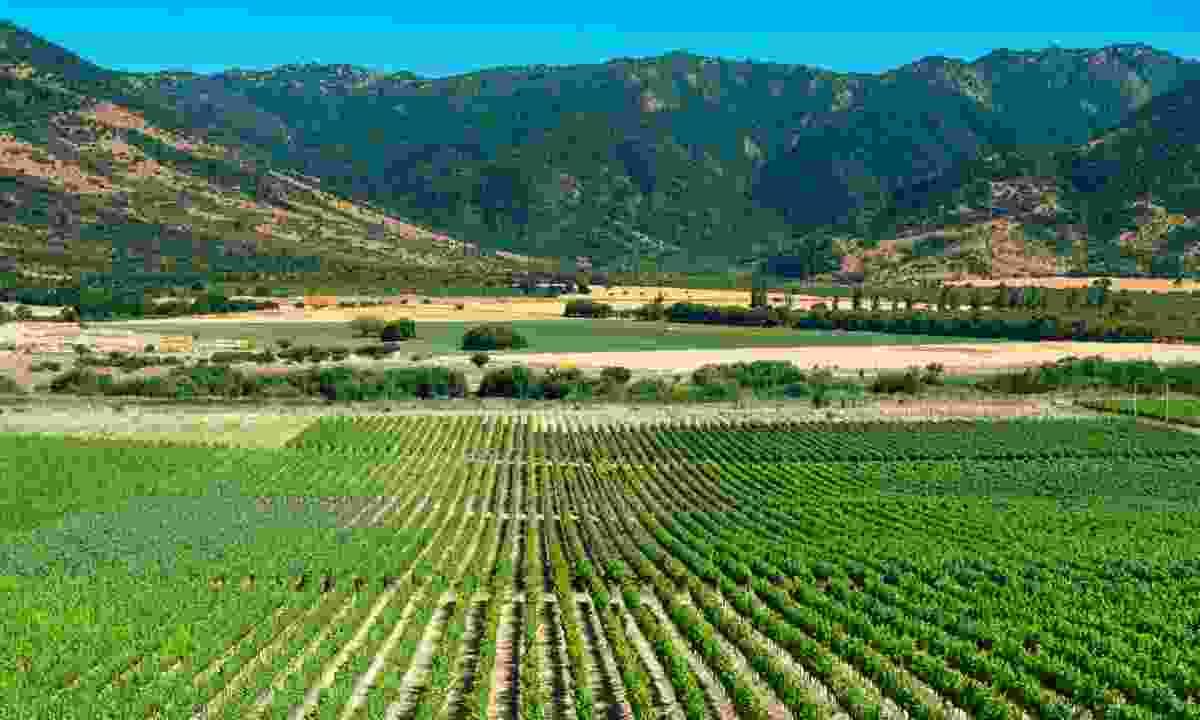 Colchagua Valley (Dreamstime)