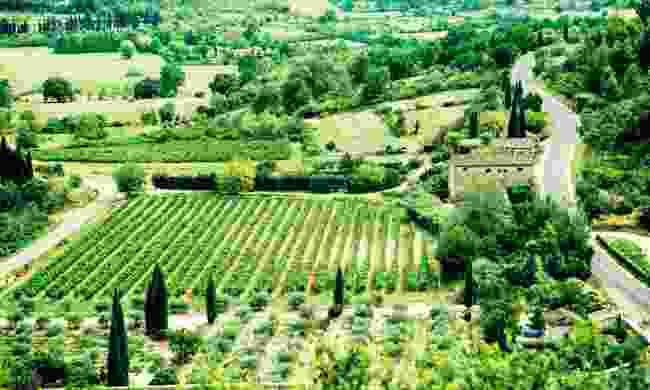 Green fields of Provence (Dreamstime)