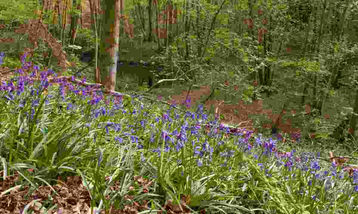 Costells Woods, Scaynes Hill, Sussex