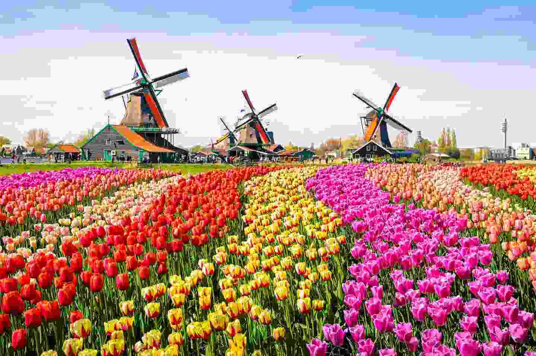 Tulips and windmills in Keukenhof Gardens, Lisse, The Netherlands (Shutterstock)