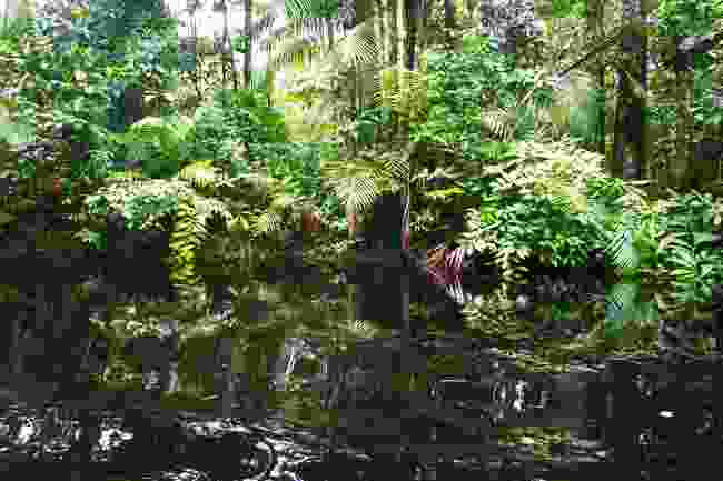 French Guiana's rainforest (Shutterstock)