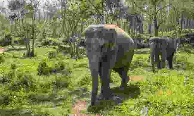 See elephants in Thailand (Shutterstock)
