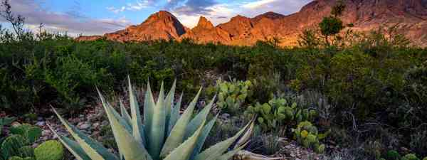 An agave cactus in Texas (Shutterstock)