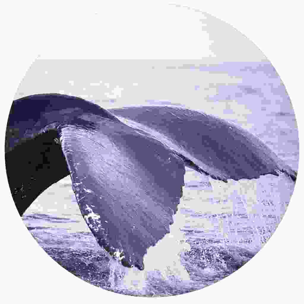 Watch whale tails make a splash
