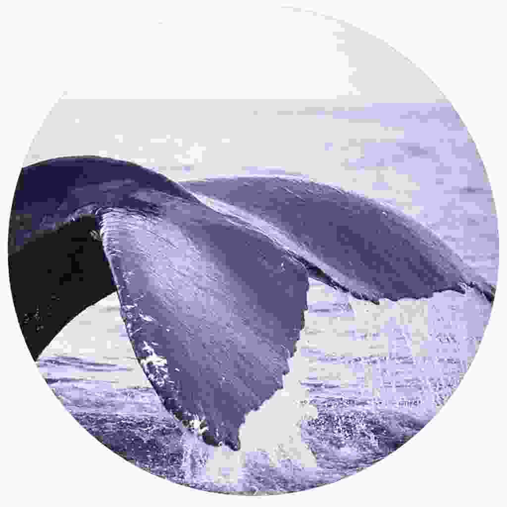 Watch whale tails make a splash