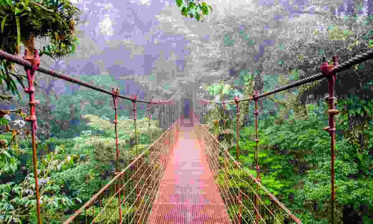 Walkway through the Monteverde cloudforest (Shutterstock.com)