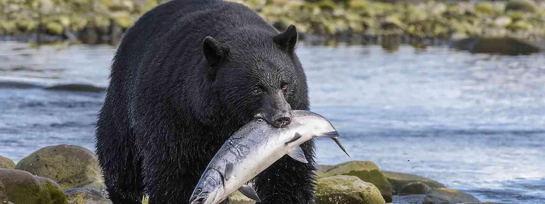 Where to find the best wildlife in British Columbia (Destination British Columbia, Yuri Choufour)