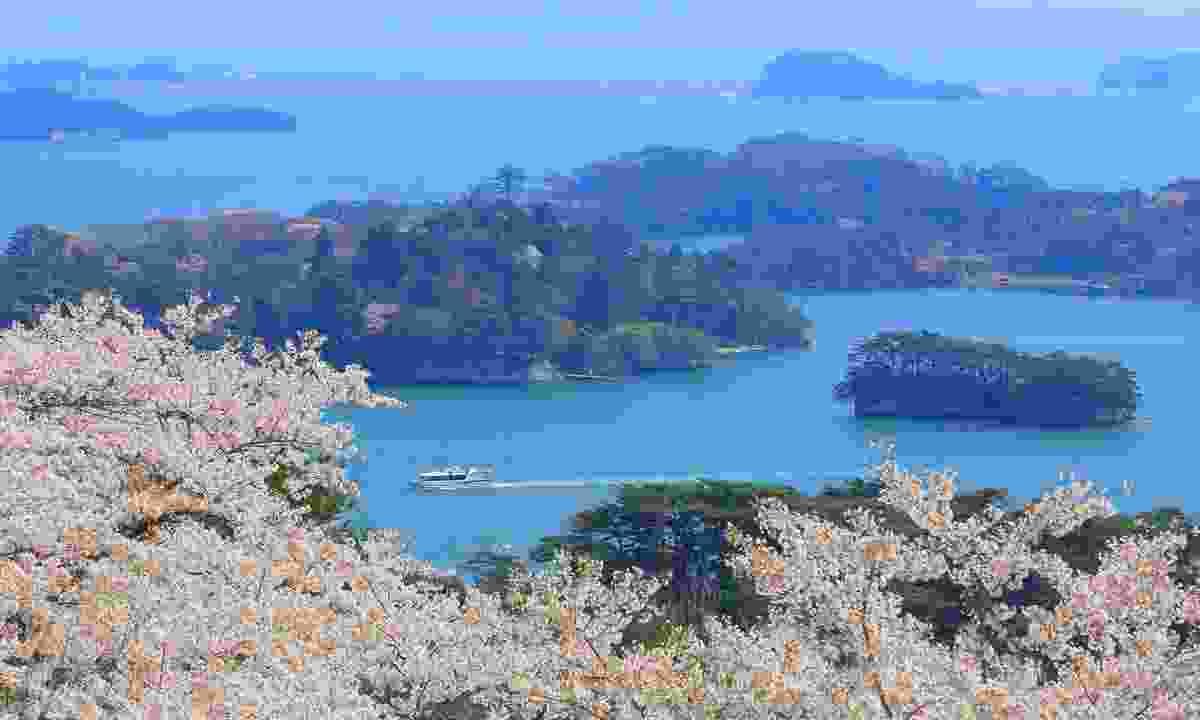 Cherry trees in Matsushima (Shutterstock)