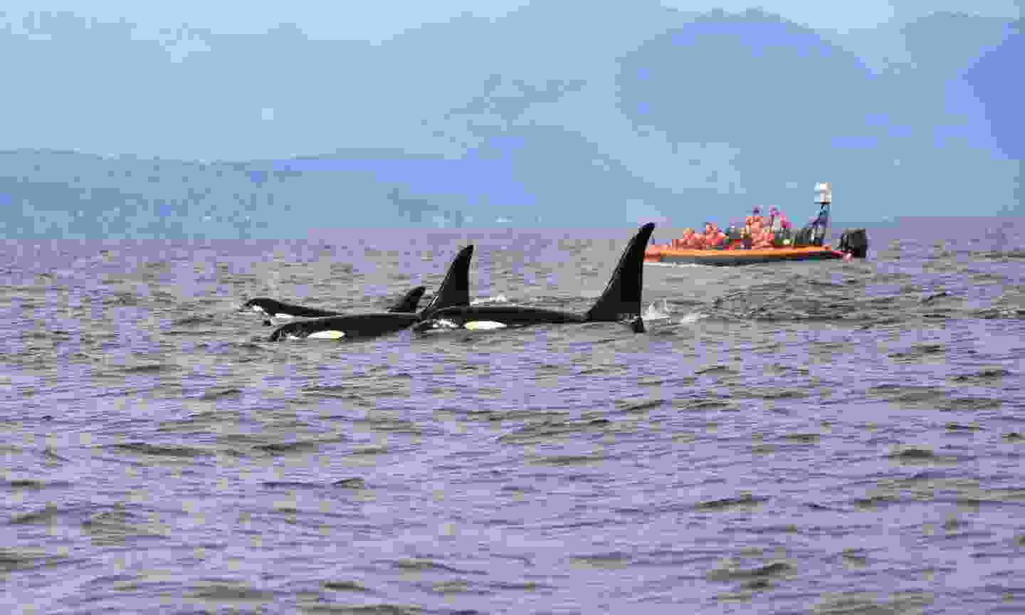 Whale watching off the coast of Vancouver (Dreamstime)