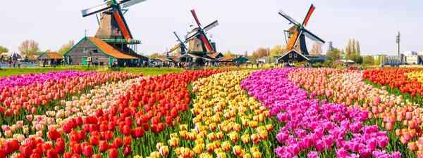 Tulips of Keukenhof Gardens, Lisse, The Netherlands (Shutterstock)
