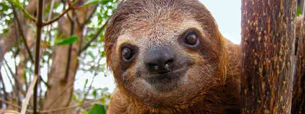 Sloth (Dreasmtime)