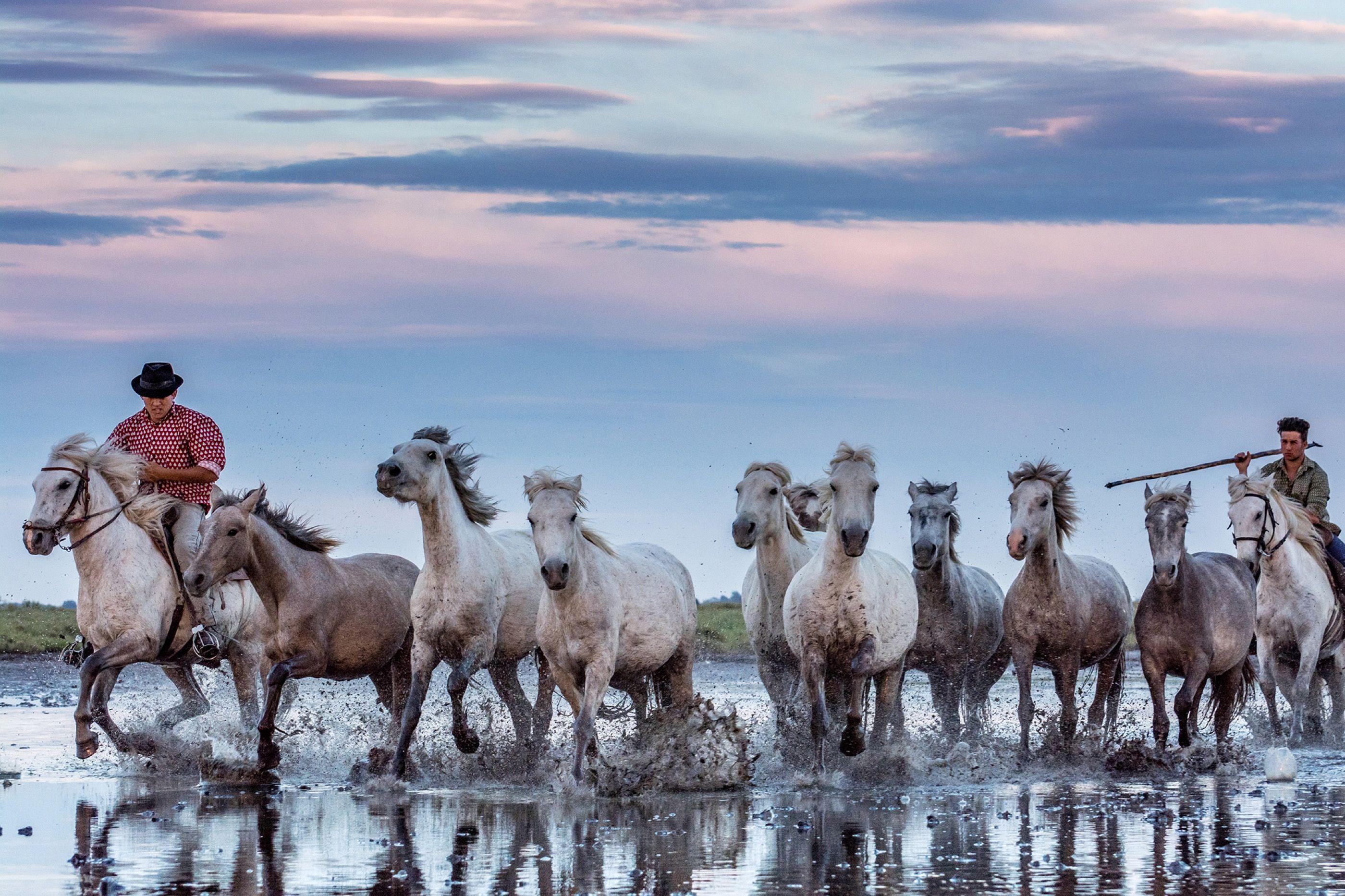 Camargue horses (Nathalie Mountain)