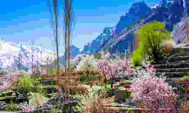 Apricot blossoms near Khapulu (Shutterstock)