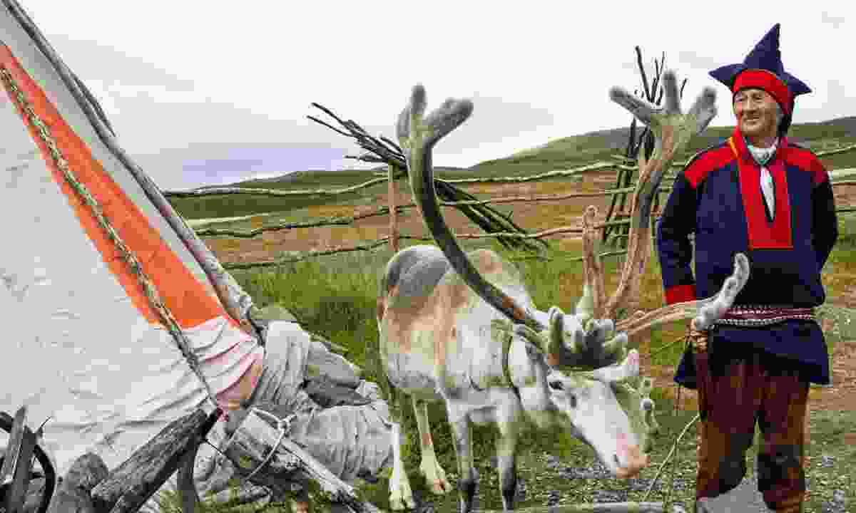 Reindeer and a member of the Sámi community (Dreamstime)