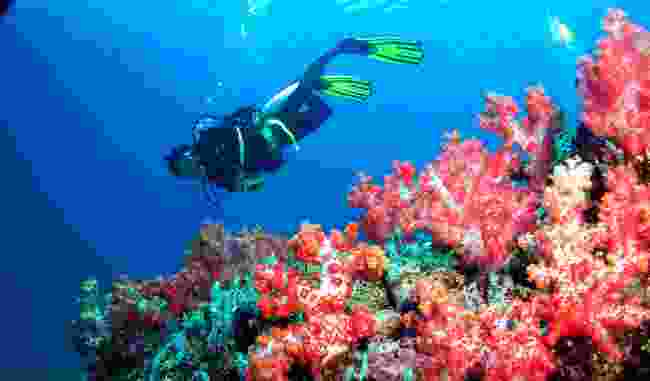 Go diving with responsible tour operators (Sarawak Tourism Board)