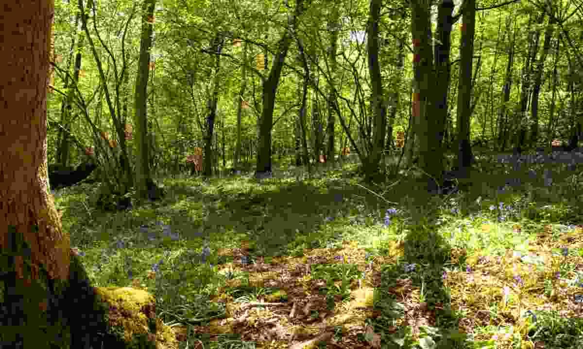 Warriners Wood, Kendal, Cumbria