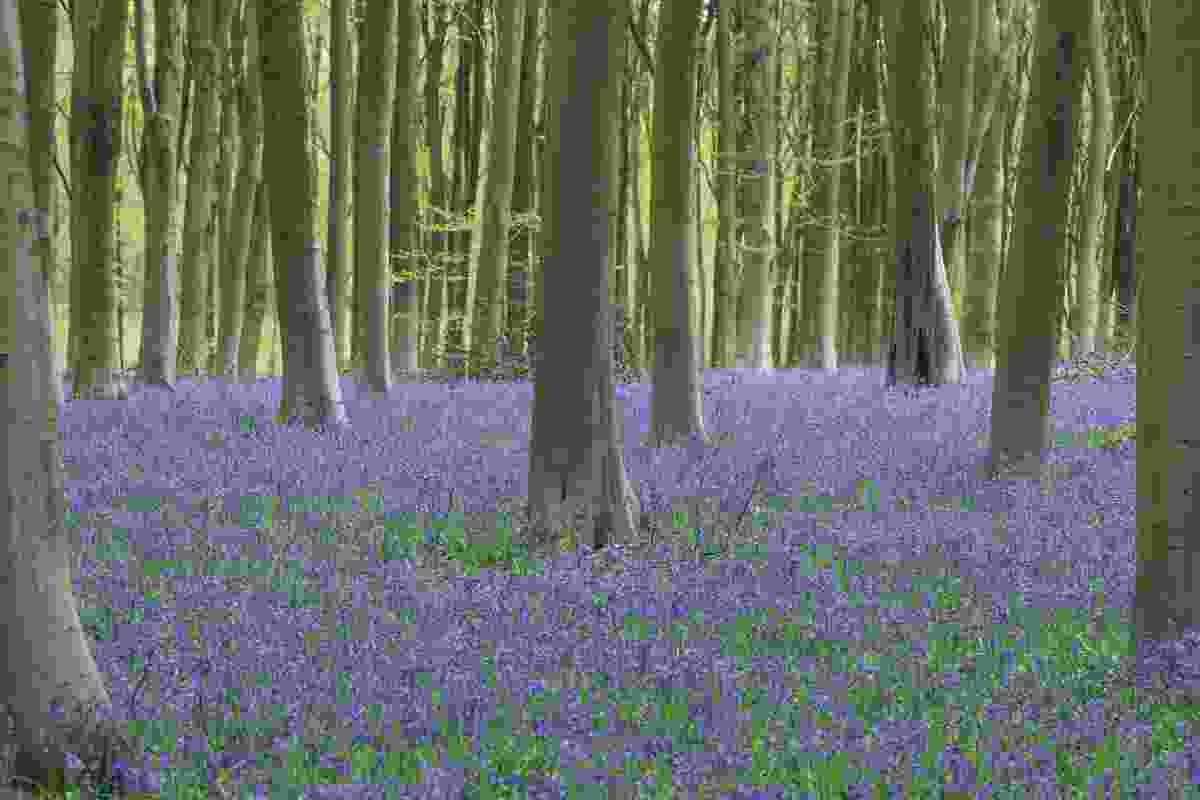 Micheldever Wood (Matthew Pinner)