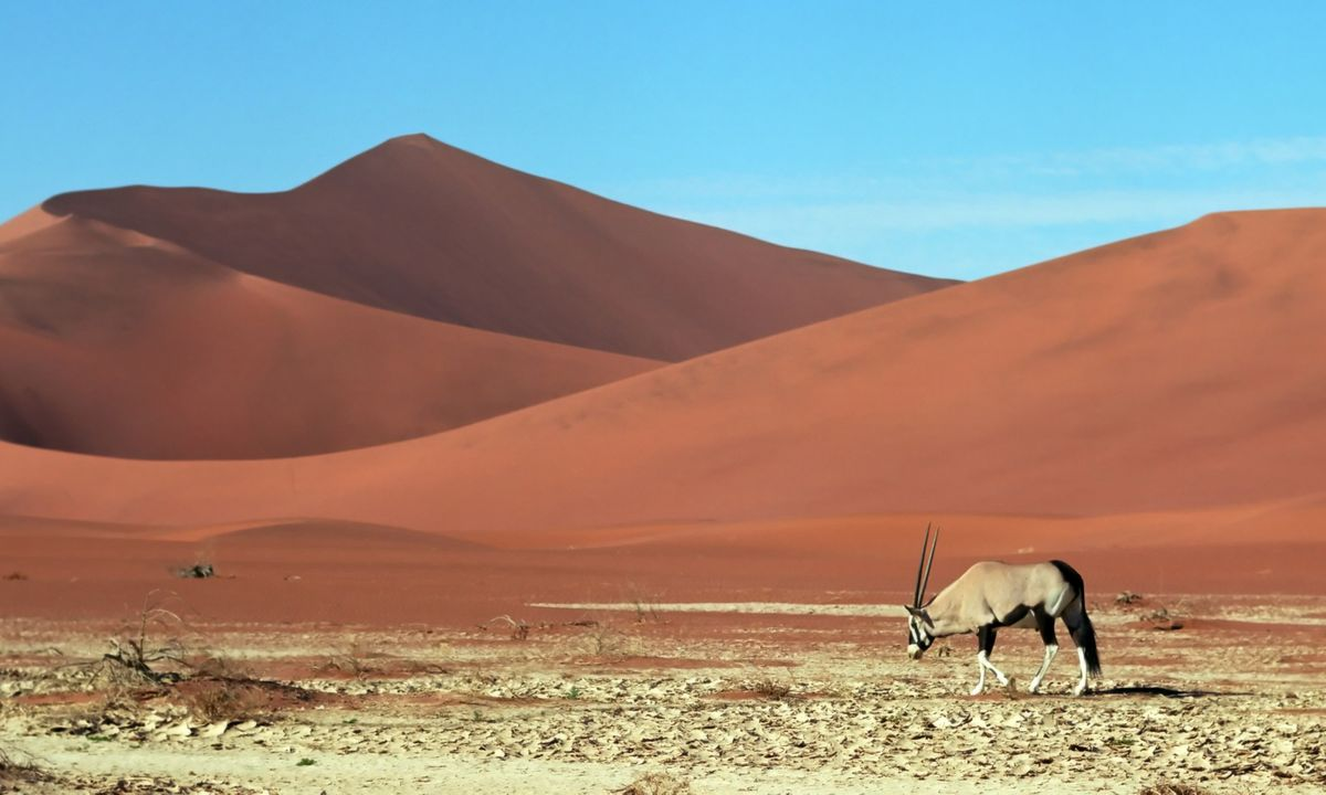 Oryx roam the arid Namib Desert (Shutterstock)