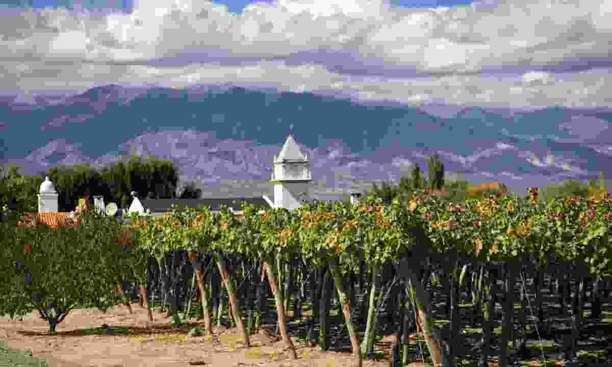 Vineyards in Cafayate, Argentina (Shutterstock)