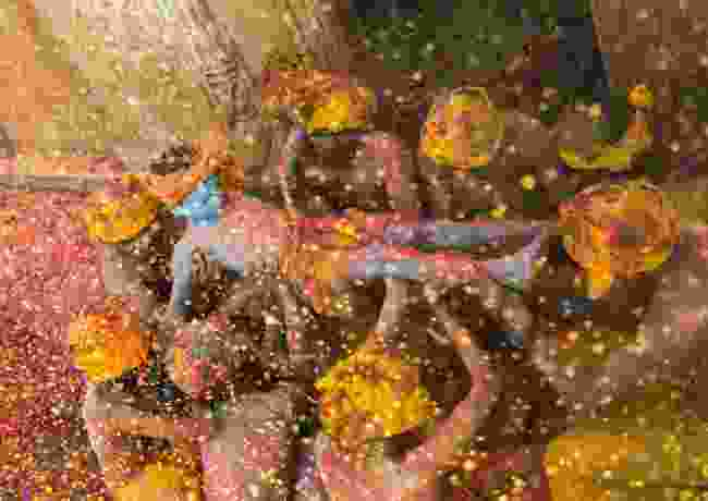 Winner: Krishna – God of colours (Sanghamitra Sarkar)