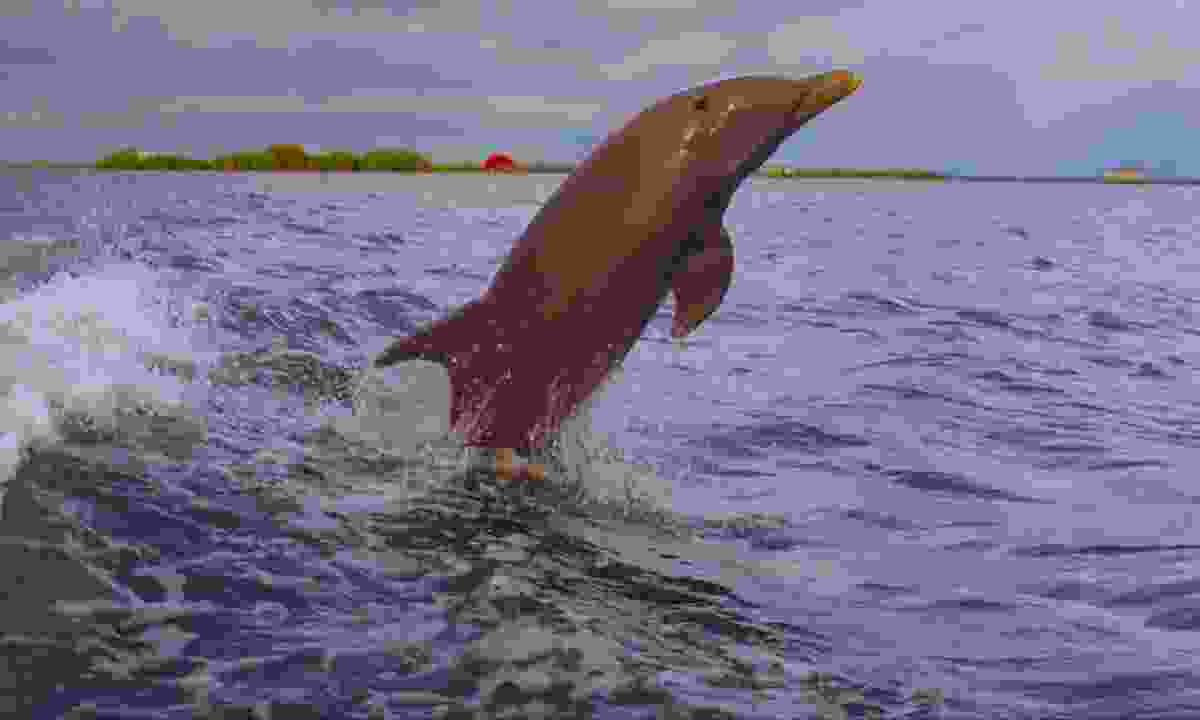 See dolphins in Fort Myers