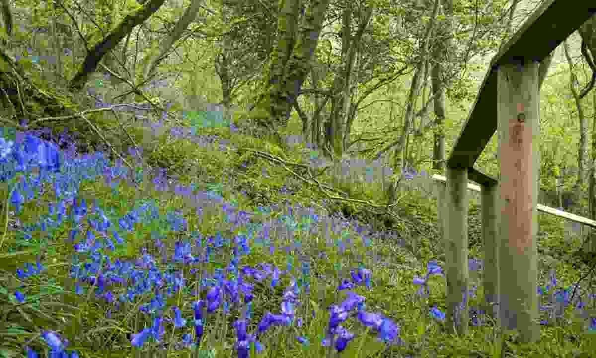 Killaloo Wood, Londonderry, Northern Ireland