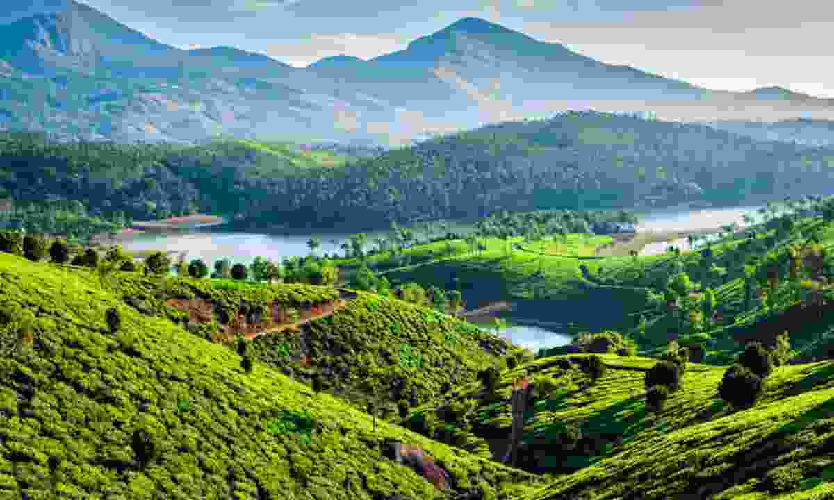 Tea plantations and Muthirappuzhayar River in Kerala, India (Shutterstock)
