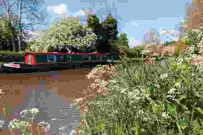 Braunston banks: White cow parsley and other spring wild flowers bloom on the side of the Grand Union canal (Shutterstock)