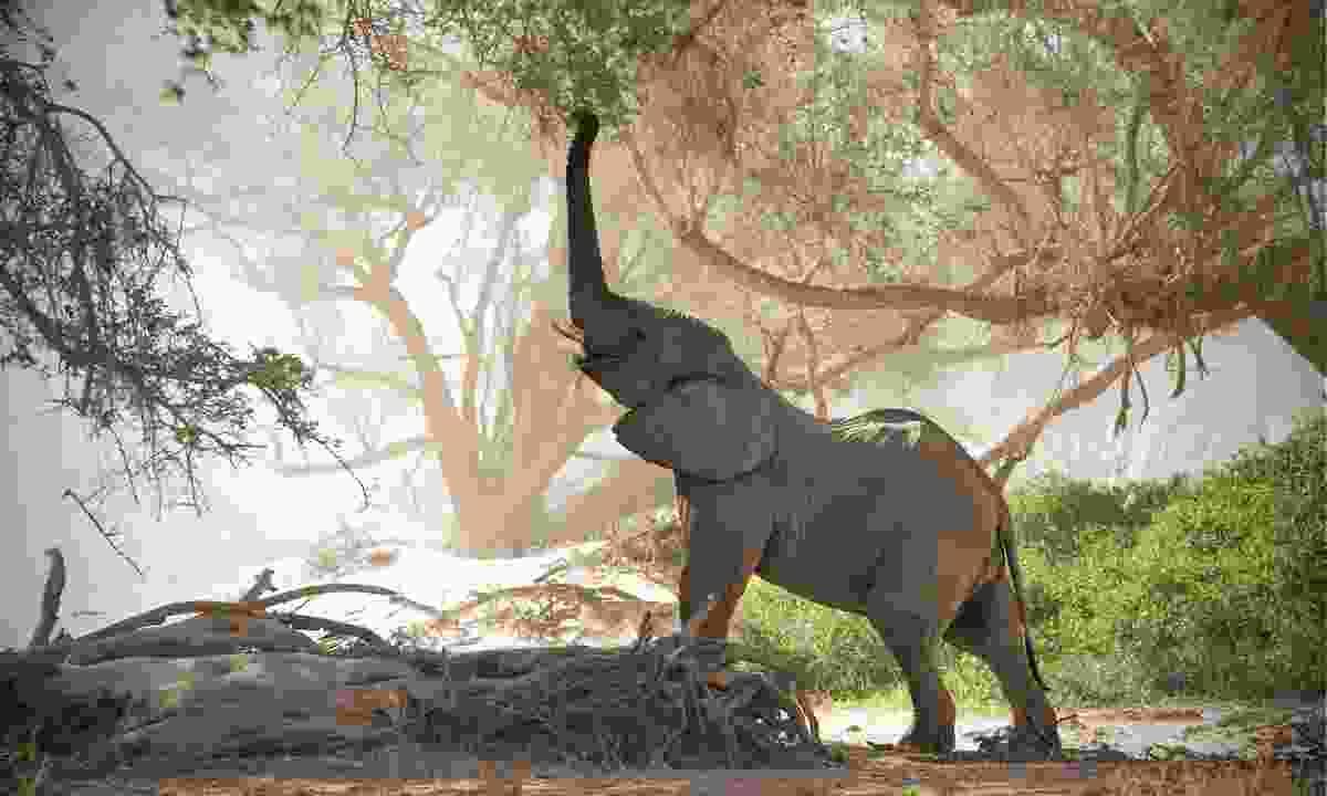 An elephant in Damaraland (Shutterstock)