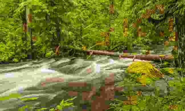 A forest stream in the Great Bear Rainforest (Dreamstime)