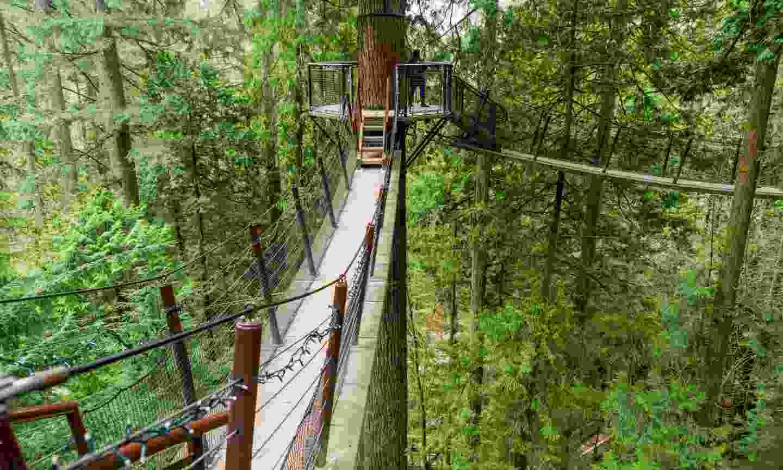 Capilano Suspension Bridge Park (Dreamstime)