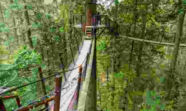 Capilano Suspension Bridge Park (Dreamstime)