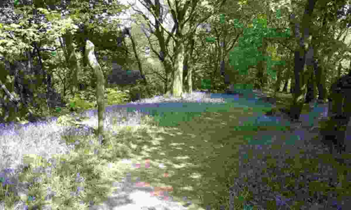 Green Castle Woods, Llangain, Carmarthen, Wales
