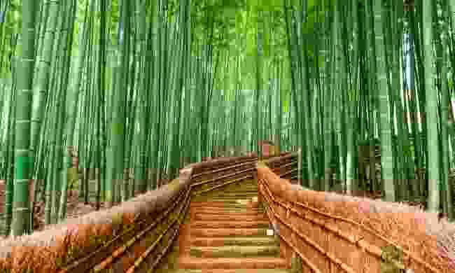 Sagano bamboo forest (Shutterstock.com)