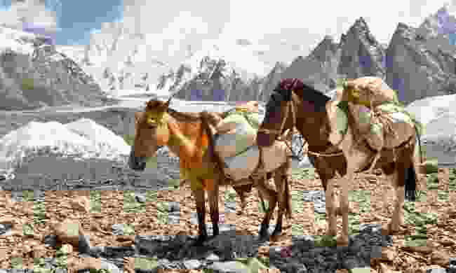 Pack Horses in the Karakorum Mountains (Shutterstock)