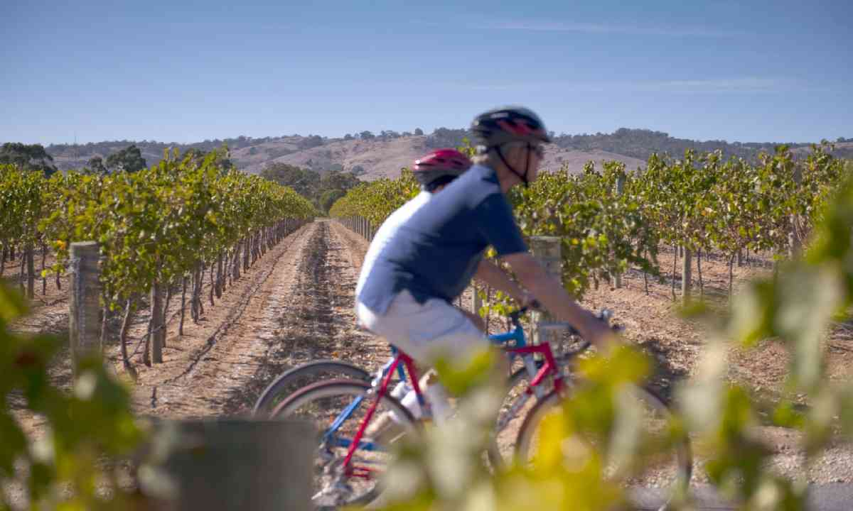 Cycling the Barossa Valley (SATC)