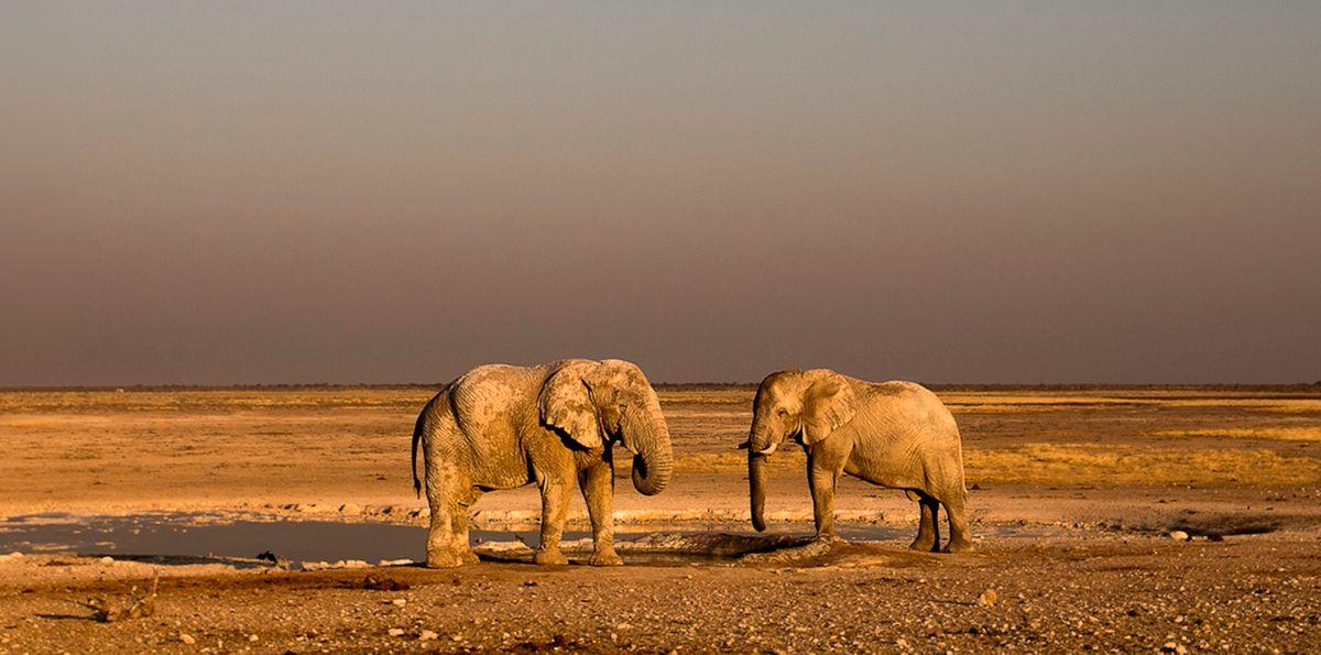 Elephants in Etosha NP, Namibia (Marina Cano)