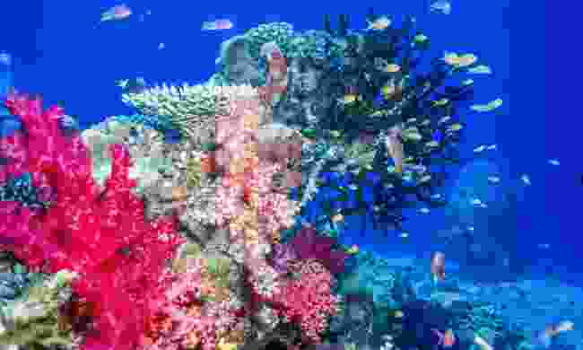 Enjoy Waitabu Marine Park's healthy coral reef (Shutterstock)