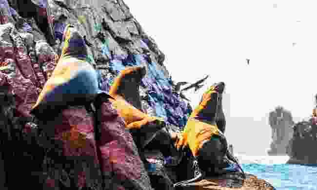 The sea lions of Paracas (Shutterstock)