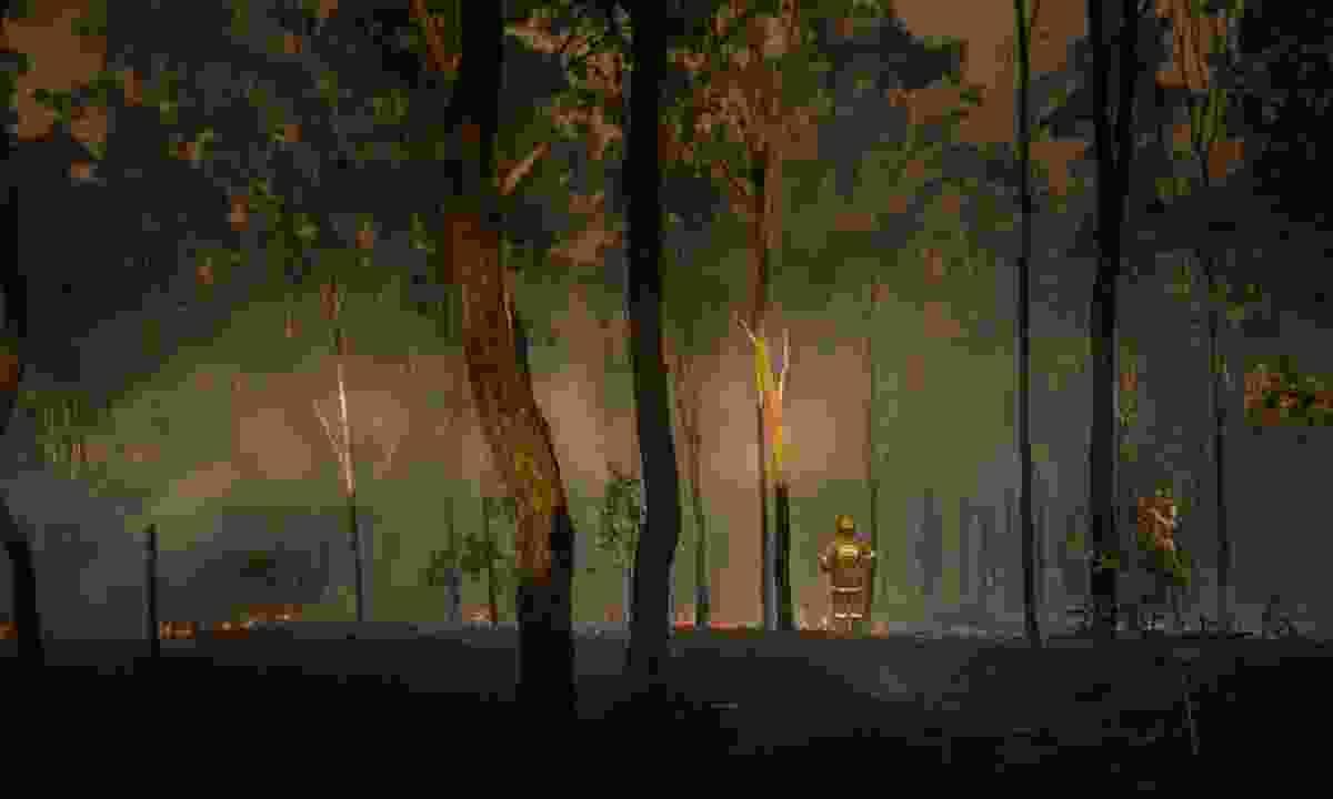 Firefighter surveying burnt forest in Australia (Shutterstock)