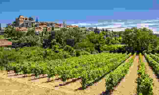 A vineyard in Provence (Shutterstock)