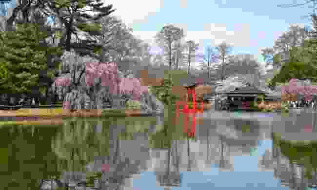 Brooklyn Botanic Garden (Dreamstime)
