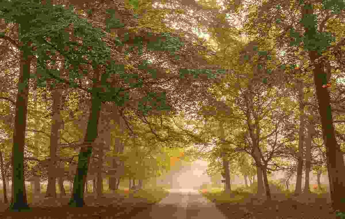 New Forest, near Rhinefield (Matthew Pinner)