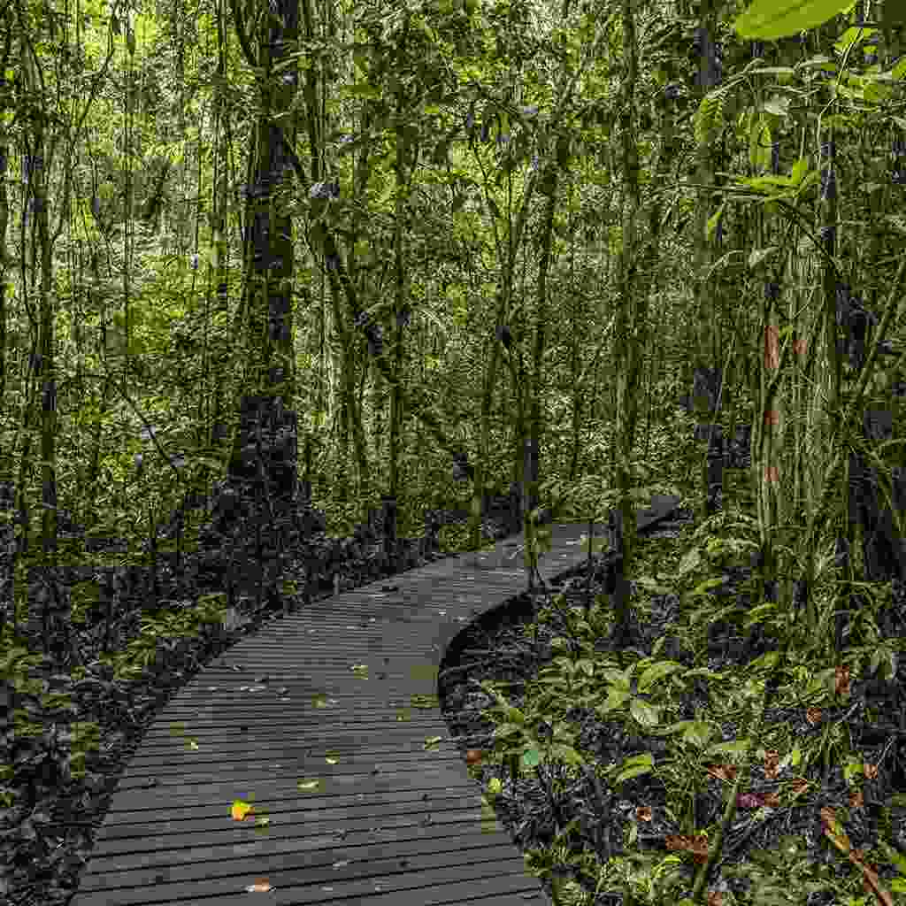 Enjoy guided jungle treks through Gunung Mulu National Park, Borneo (Shutterstock)