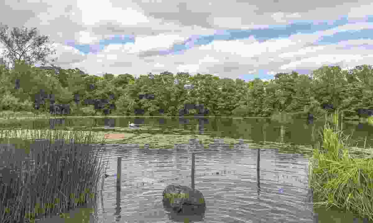 A pond on Hampstead Heath (Dreamstime)
