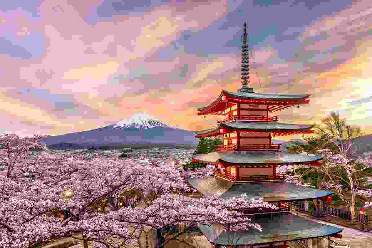 Fuji surrounded by cherry blossoms, Japan (Dreamstime)