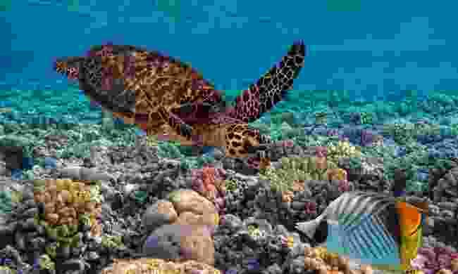 Vanua Levu is home to Fiji's best kept diving secret (Shutterstock)